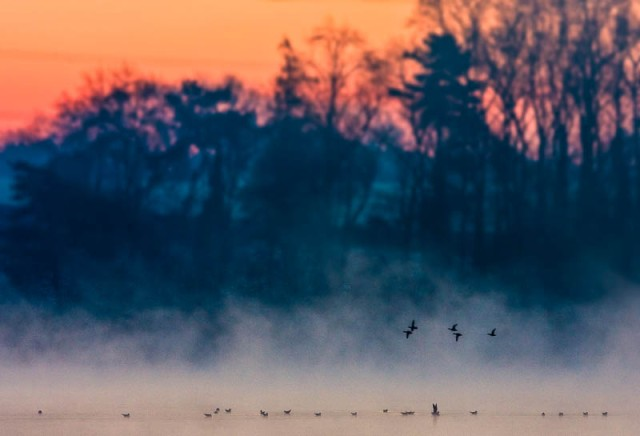 Birds on water at Dawn - Swithland