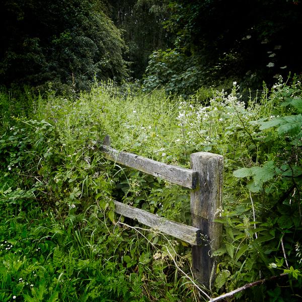 20140616-IMG_2186 - Abandoned Railway Line - Bagworth
