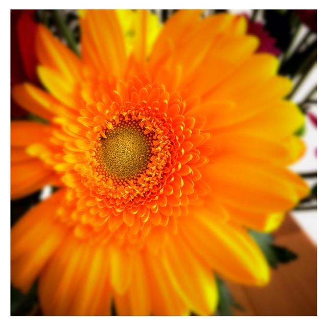 20140703-IMG_001576 (1)- Orange Flower