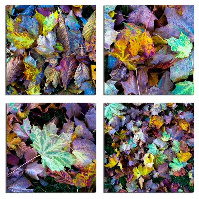 Autumn Leaves - small