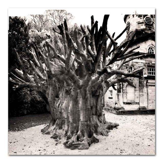 False Tree