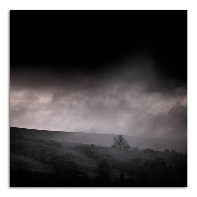 Tree in the Mist - Bishopdale