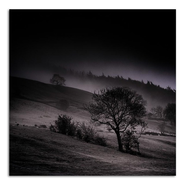Trees in the Mist - Bishopdale
