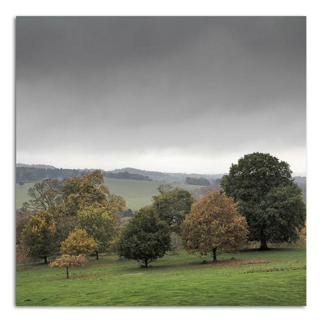 Trees - YSP
