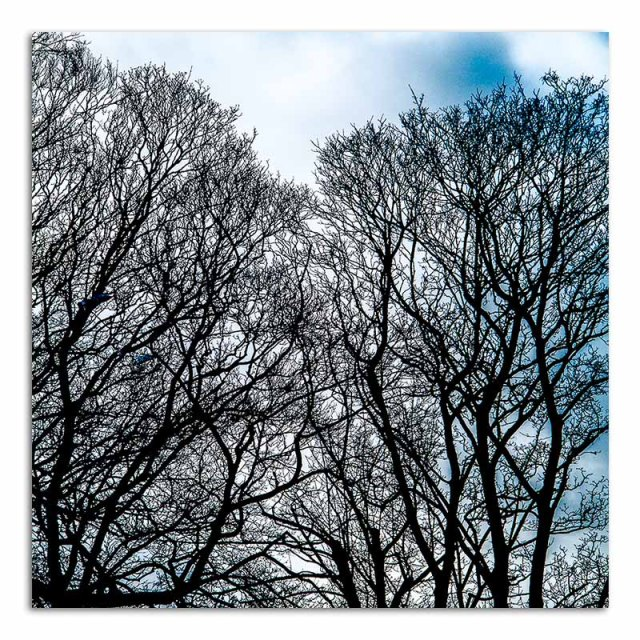 Trees - Loughborough