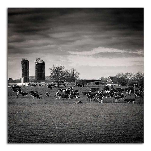Farm - Thrussington
