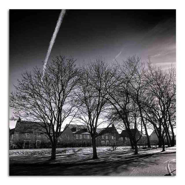 Trees - East Goscote