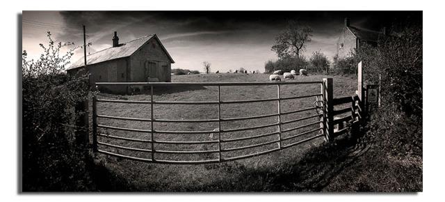 Bull in Field - South Croxton