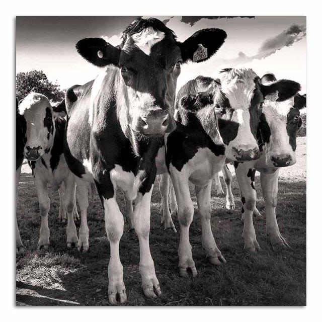 cow-posse-no3
