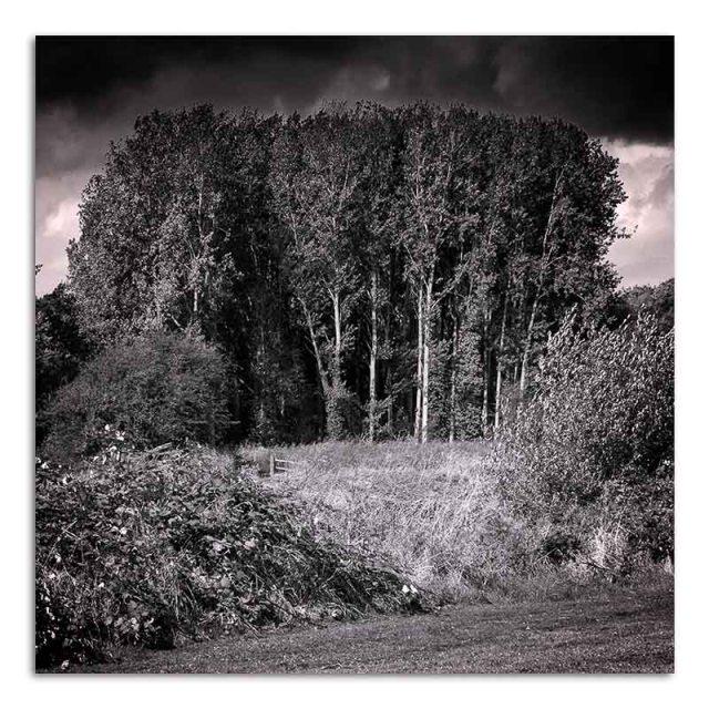 trees-watermead-park-2