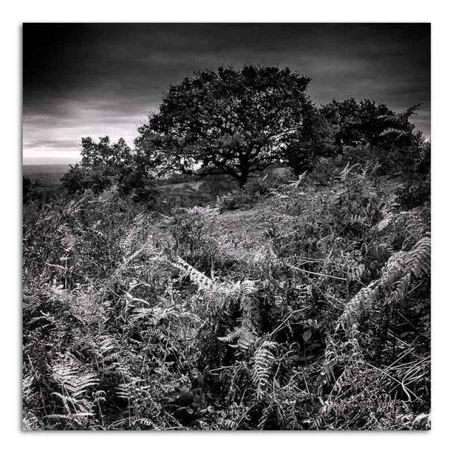 bracken-beacon-hill