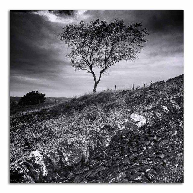 tree-and-wall-beacon-hill
