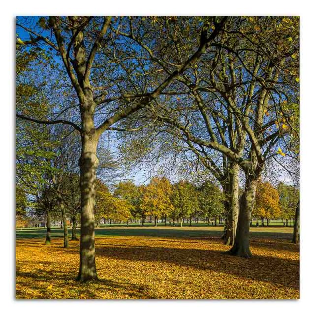autumn-trees-and-leaves