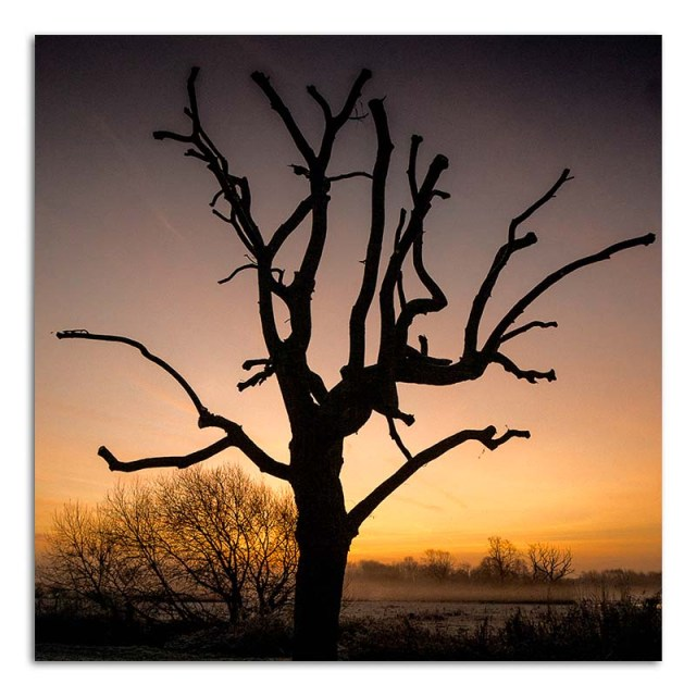 pollarded-tree