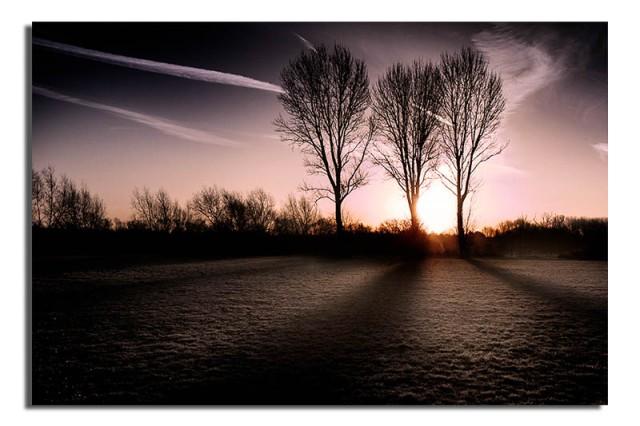 sunrise-through-the-trees