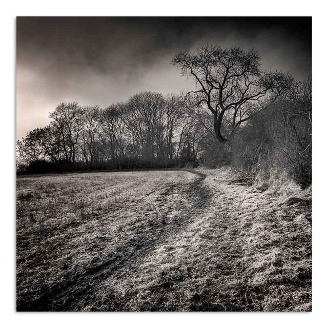 winter-hedgerow-thorpe-shachville